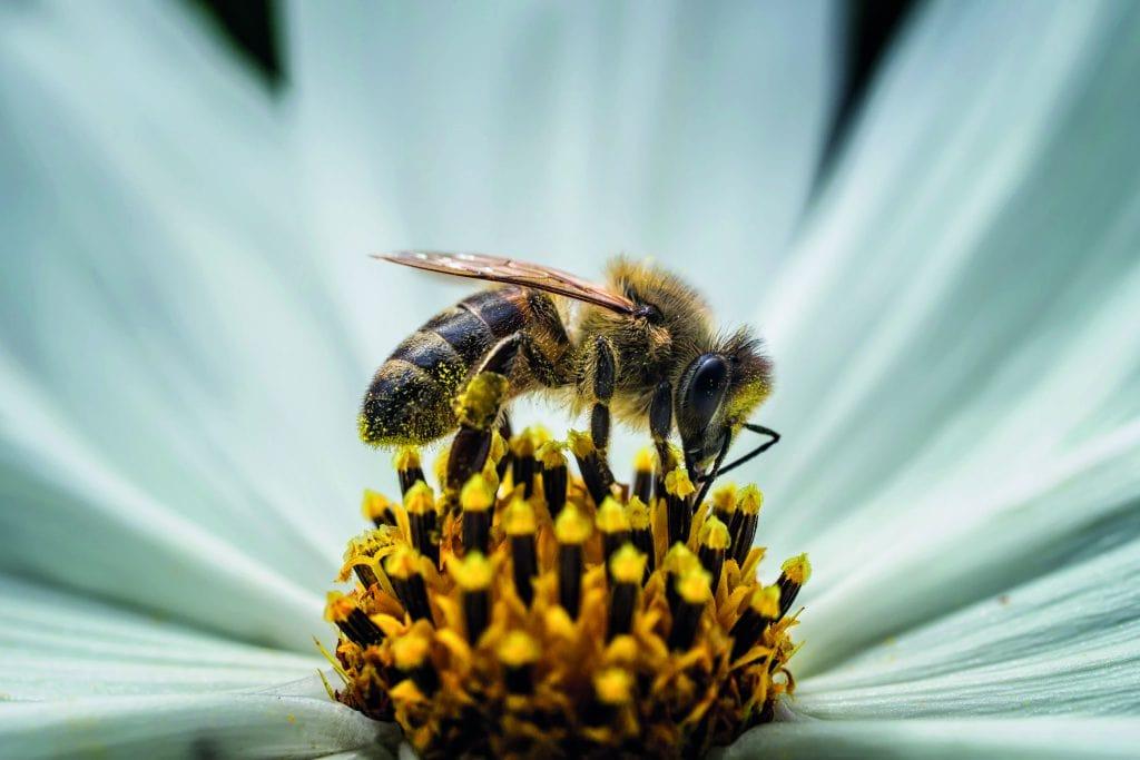 World Bee Day x Guerlain