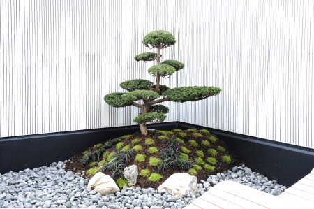 Luxury Trees Bonsai