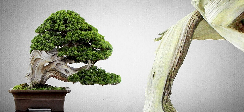 LuxuryTrees Bonsai